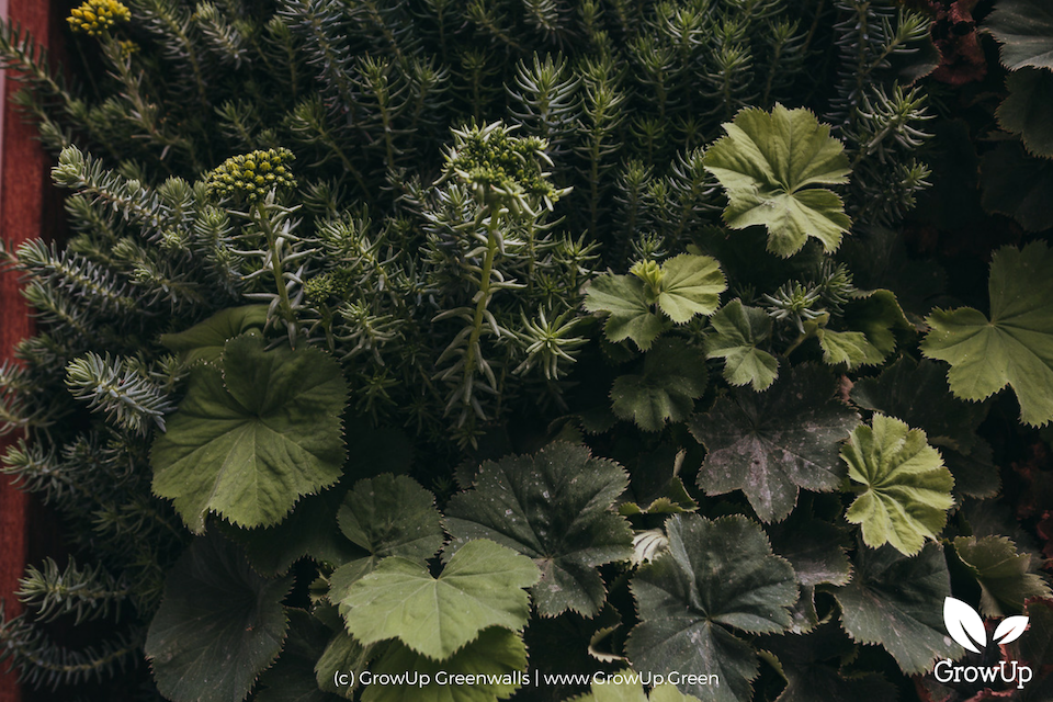 A close-up of plants in a greenwall