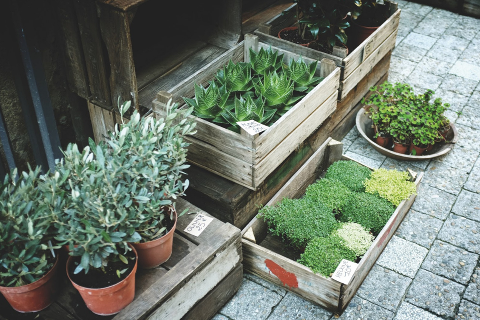 You should be selling greenwalls because...