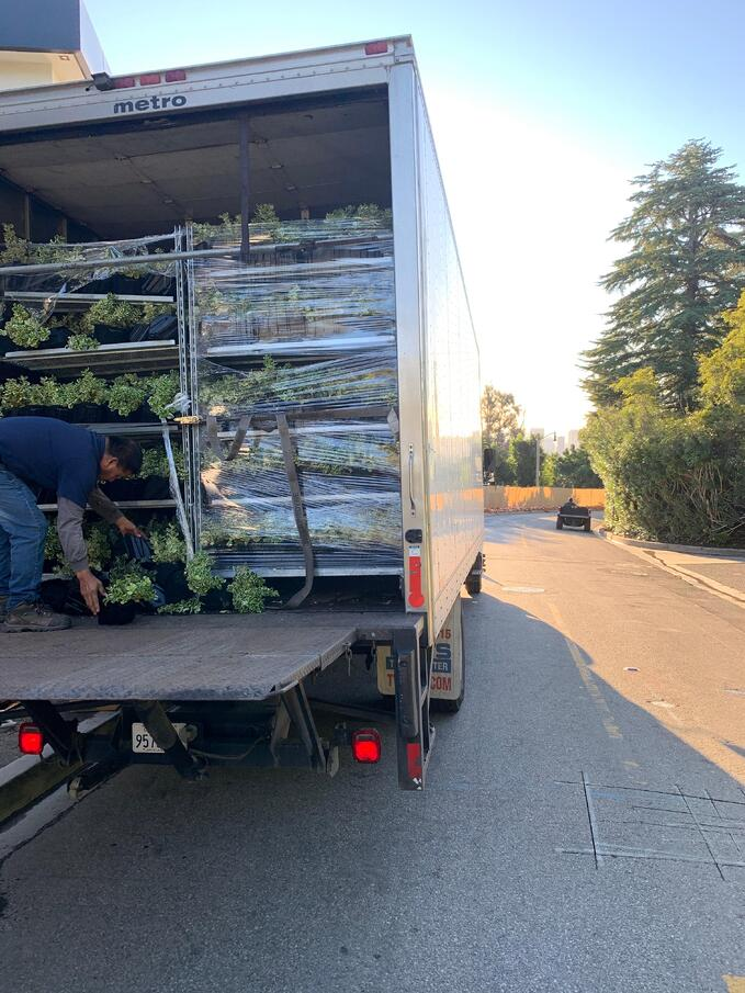 Plants For Greenwall Being Delivered on Racks