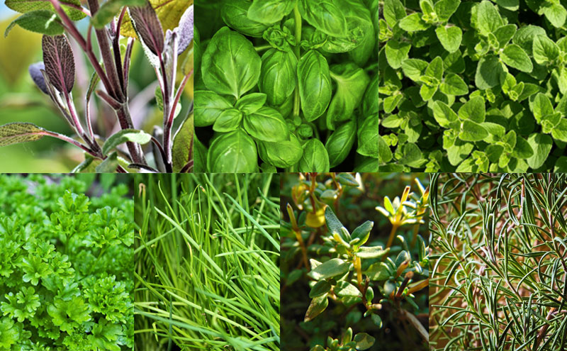 All the herbs you need for an Italian mix