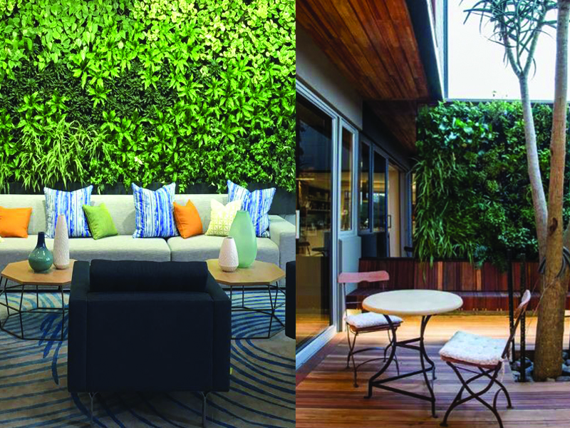 Examples of clients' green walls