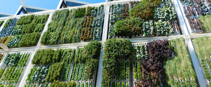 Office Living Greenwall Outdoors