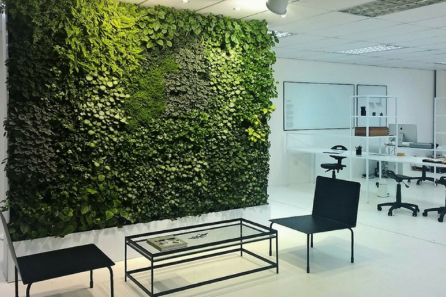 Budget Savvy A Green Wall For Your Office Redesign Update