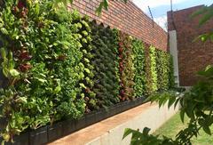 GrowUp green walls