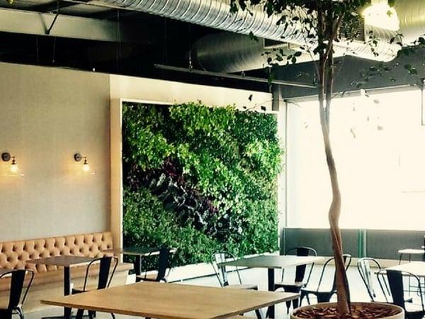 Why vertical garden for an office