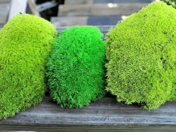 Pillow Moss