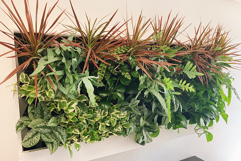 greenwall in an office space