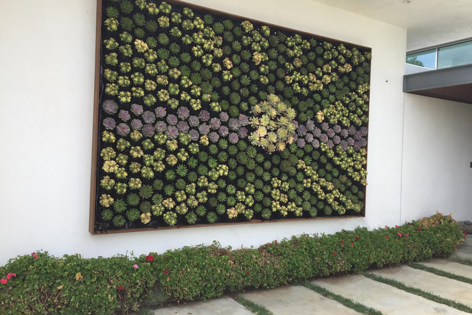 how to plan your succulent living wall