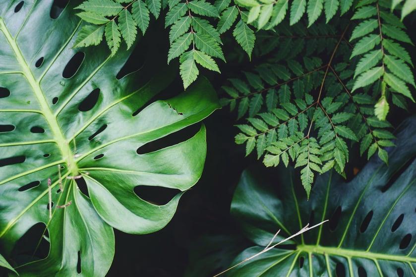 close-up of greens