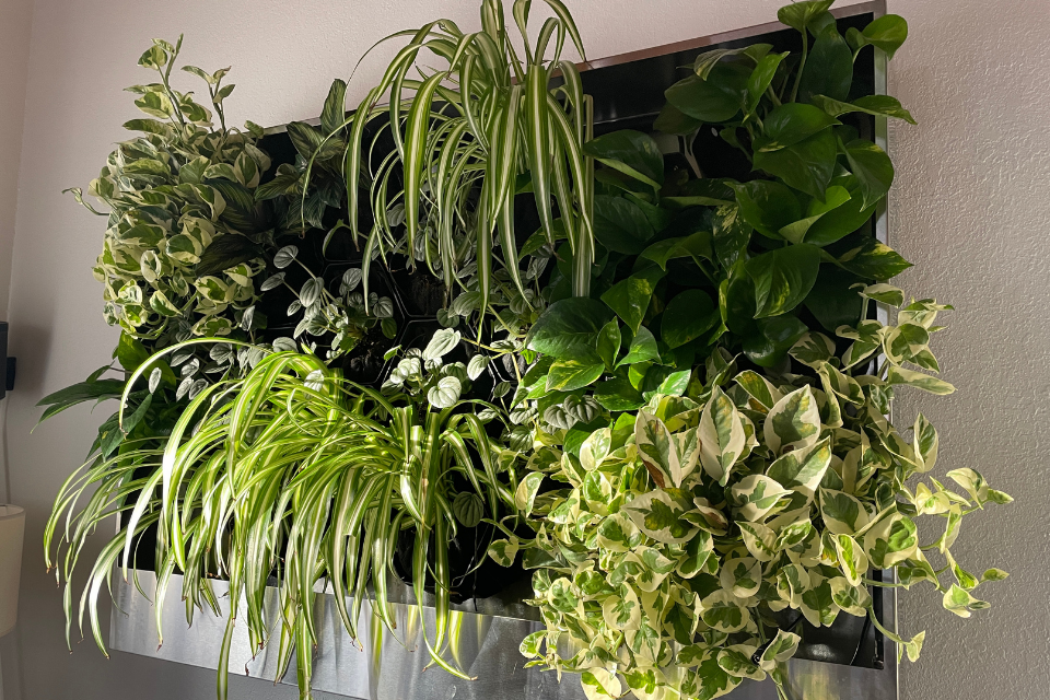 greenwall mounted on a wall